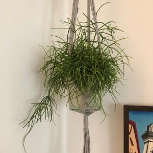 Macramé colgador para plantas