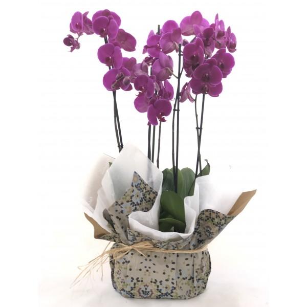 Duo orquideas moradas