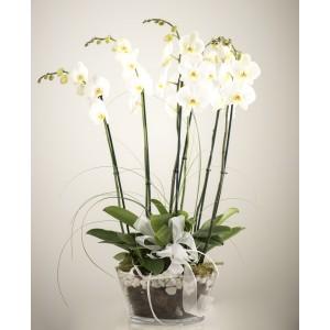 Centro trío orquídeas blancas