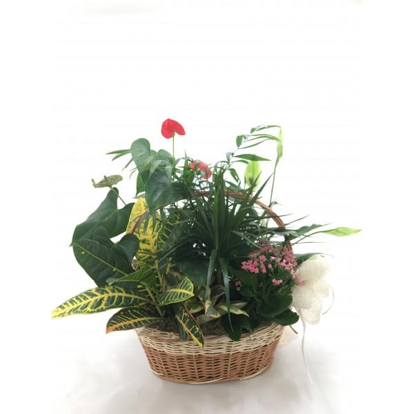 Composición plantas interior II