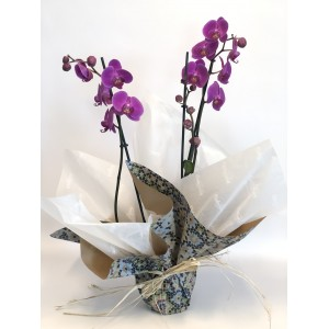 Orquídeas colores diferentes