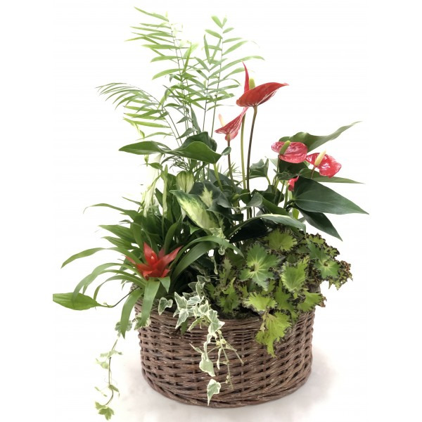Composición plantas interior IV