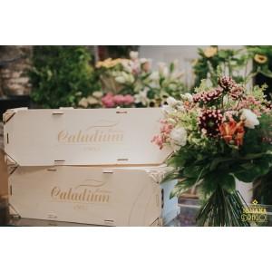 Caladium DIY flores de temporada