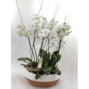 Centro 4 orquideas