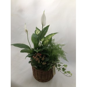 Composición plantas interior I